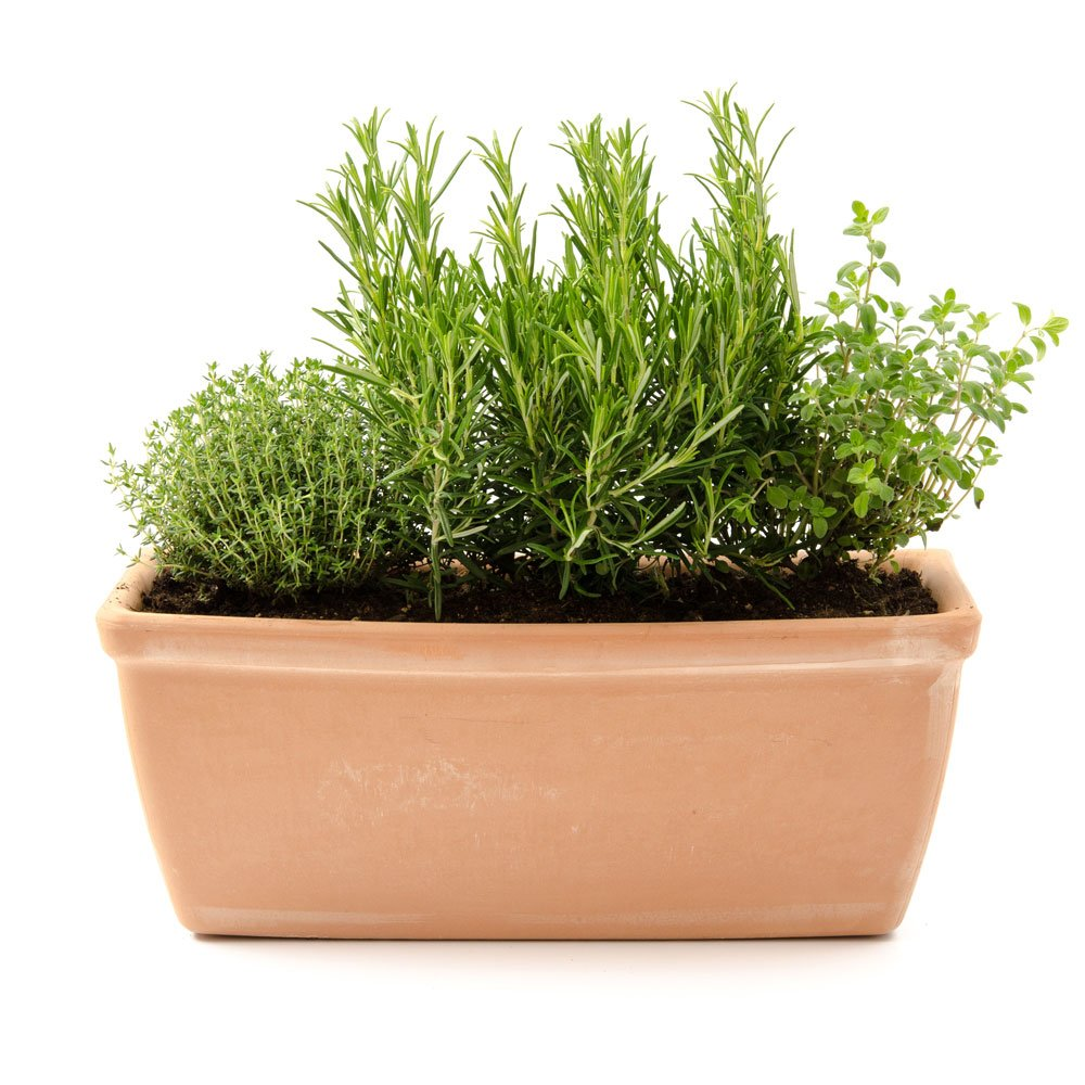 Planter with herbs