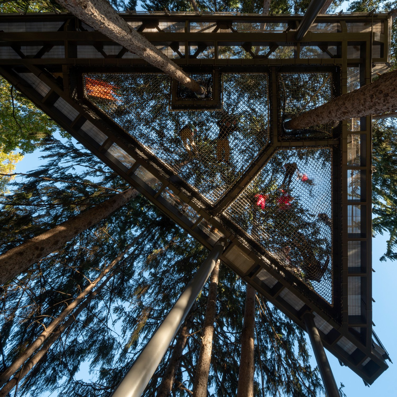 Canopy Walk netting from below